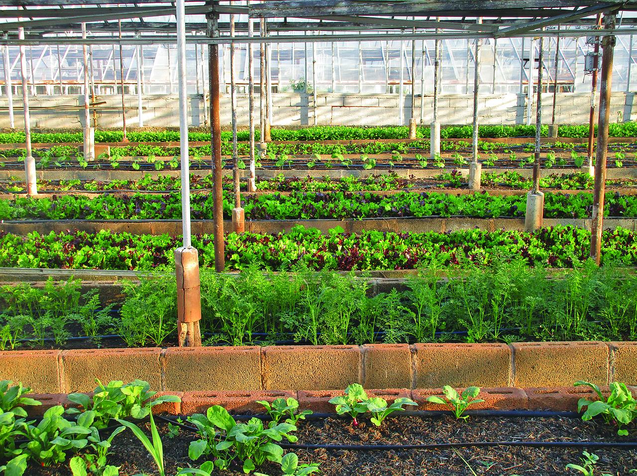greenhouse-3247181_1280