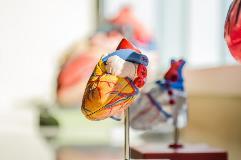 heart-2607178_1920